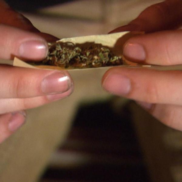 Un individu prépare un joint de marijuana.
