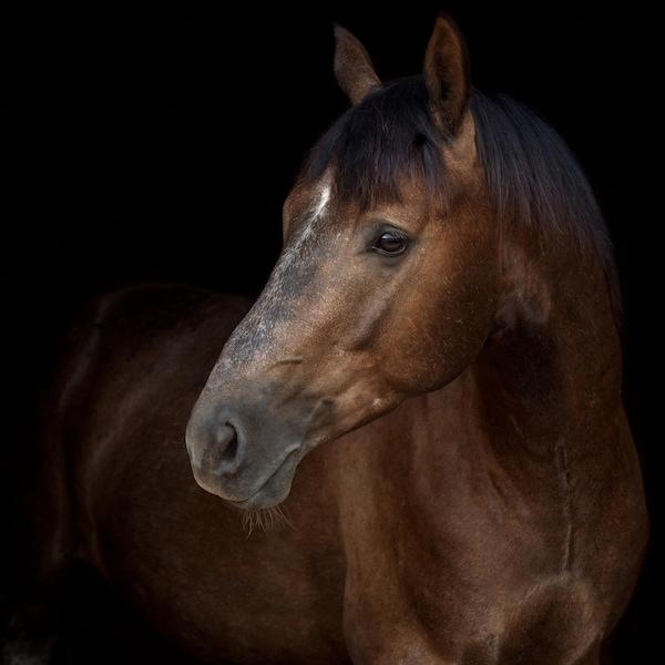Un cheval.