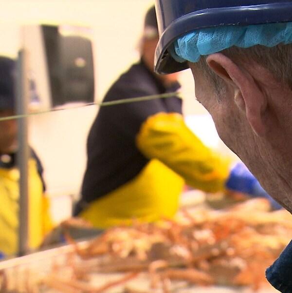 Travailleurs saisonniers dans une usine de transformation du crabe.