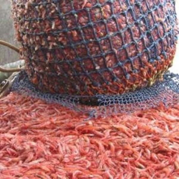 Les crevettes congelées canadiennes ne sont plus soumises à un tarif douaniers européens de 12 pour cent.