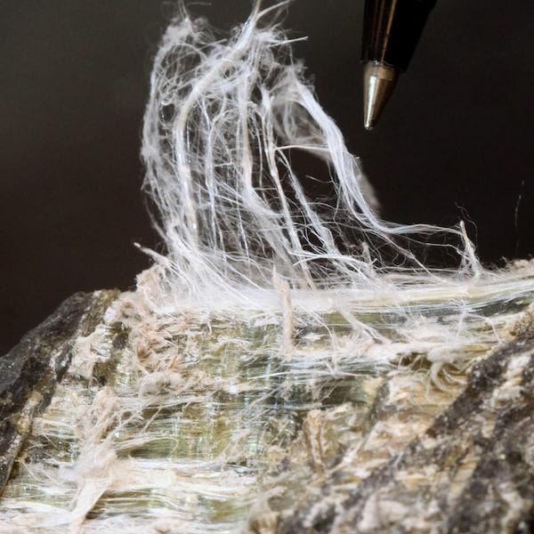 Fibre d'amiante chrysotile.