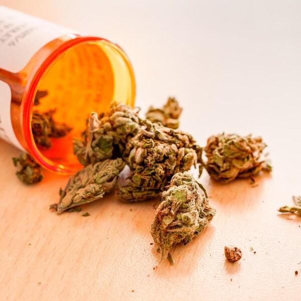 Des dispensaires de marijuana médicinales au N.-B. se demandent pourquoi la politique de tolérance à laquelle ils ont eu droit a soudainement pris fin.
