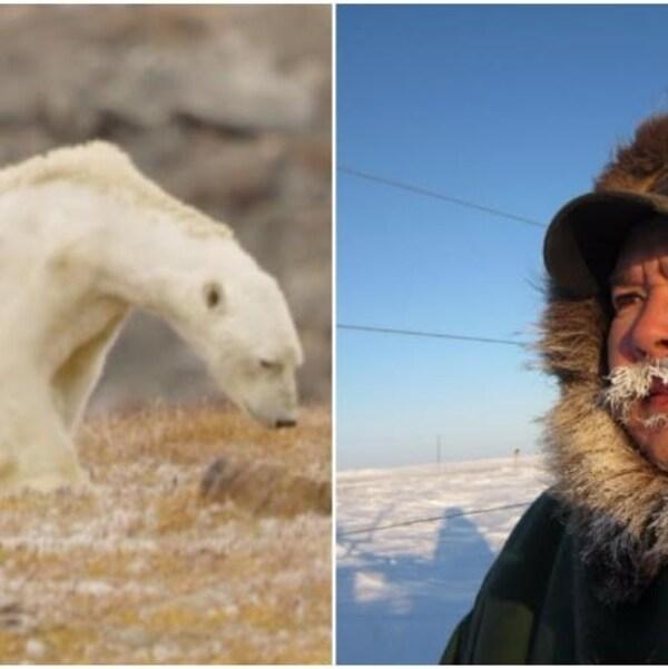 Un ours polaire amaigri et Leo Ikakhik