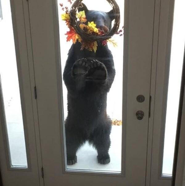 Un ours noir