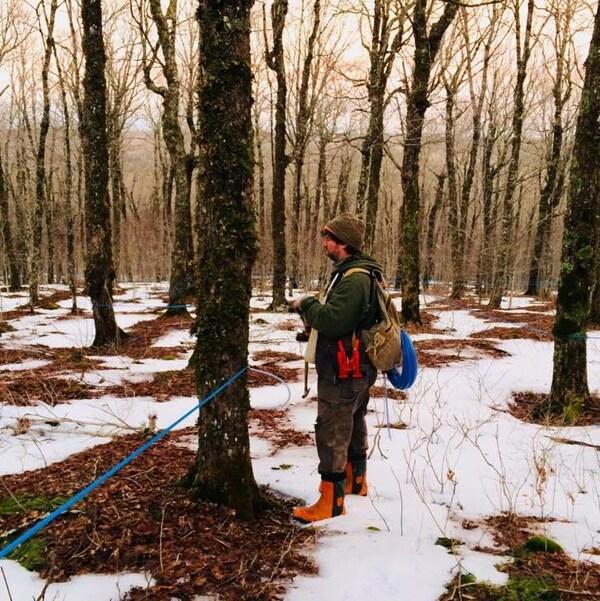 Scott Whitelaw inspecte son érablière à la mi-février. Le faible couvert de neige a rendu l'accès aux arbres plus facile et les températures chaudes ont fait couler la sève plus tôt que d'habitude.