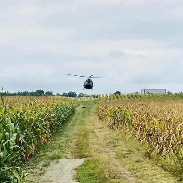 Un hélicoptère de la Sûreté du Québec survole des terres à la recherche de plantations de cannabis.