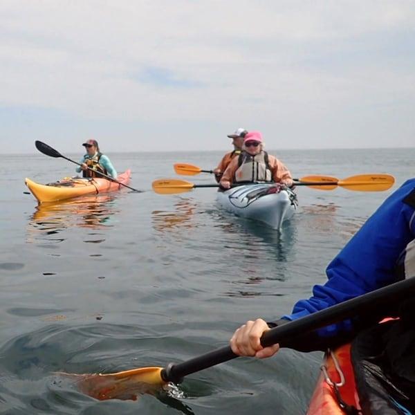 Cinq kayaks sur le fleuve saint-laurent.