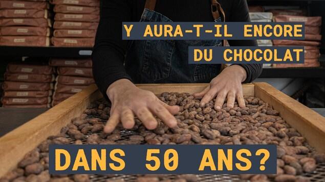 Y aura-t-il encore du chocolat dans 50 ans?