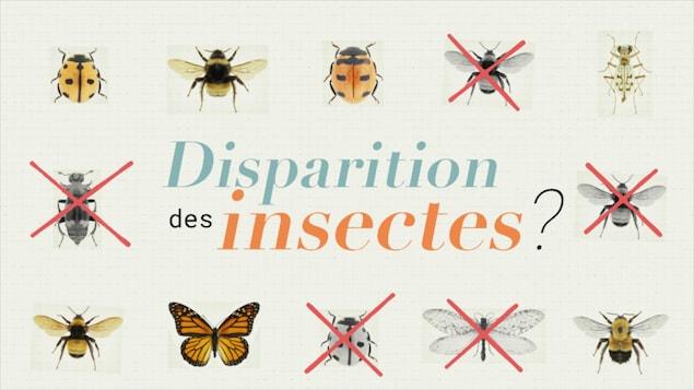 Disparition des insectes?