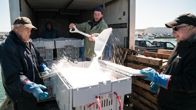 Un pêcheur de crabes tire de la neige sur un arrivage de crabe des neiges dans un contenant ouvert par deux autres pêcheurs.