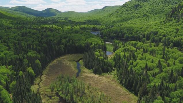 Un paysage diversifié avec de la forêt, une rivière et un marais.