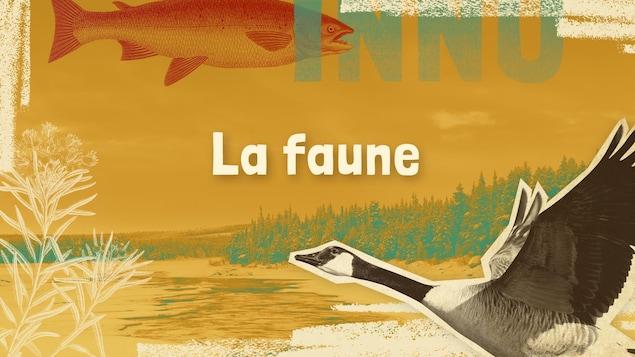 Lexique innu-français des mots et expressions liés à la faune.