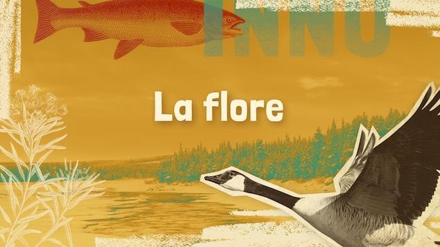 Lexique innu-français des mots et expressions liés à la flore.