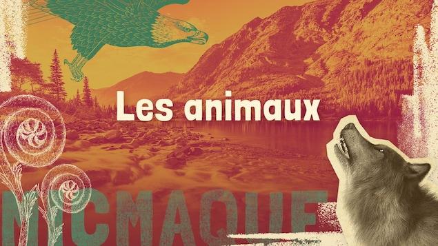 Lexique micmaque-français des mots et expressions liés aux animaux.