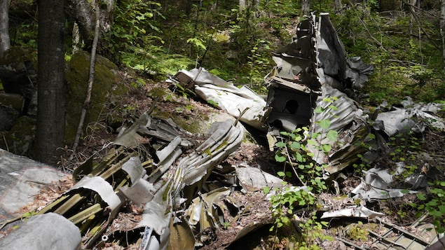 Des débris d'un avion sur le sol dans une forêt à travers les arbres.