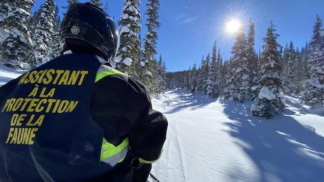 Un homme de dos sur une motoneige dans une forêt enneigée sous un grand soleil.