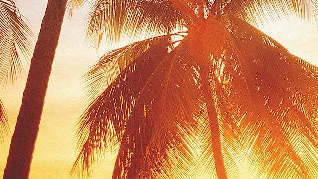 Palmiers au coucher de soleil