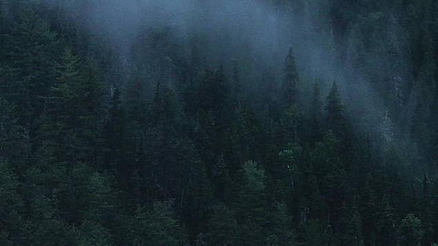 Photo d'un paysage d'une forêt de sapins dans la brume.