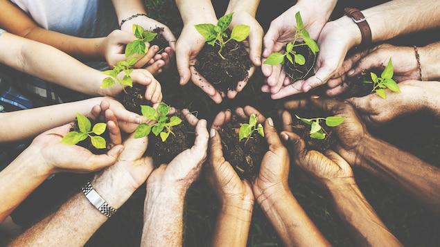 Plusieurs personnes, qui ont des pousses d'arbres en terre dans le creux de leurs deux mains jointes, mettent en commun toutes ces mains.