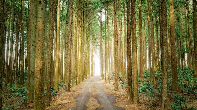 Un sentier au milieu des arbres dans une forêt.