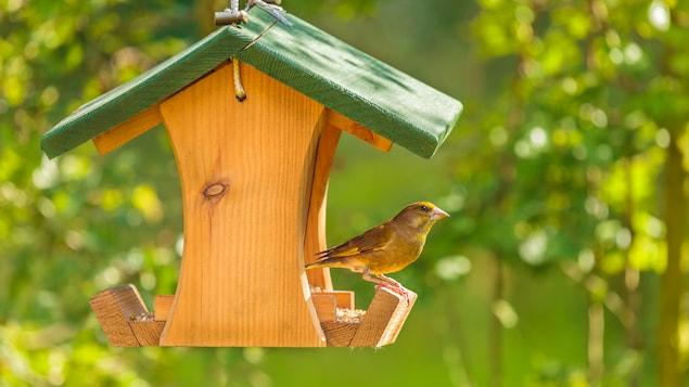 Un oiseau perché sur le bord d'une mangeoire