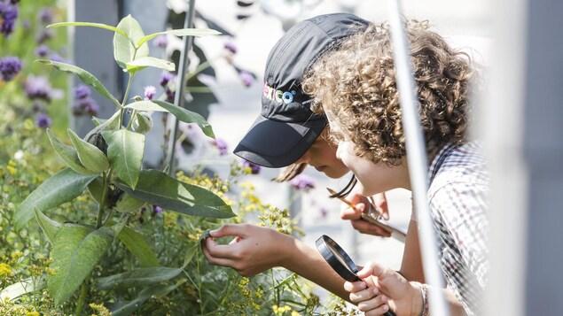 Loupe à la main, deux enfants observent des insectes sur une plante.