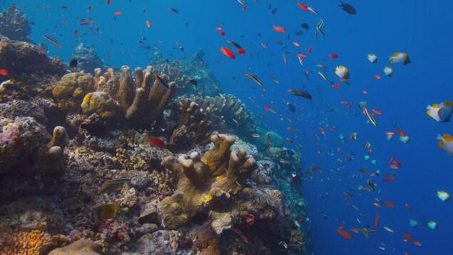 Des poissons nagent près d'un récif de corail.