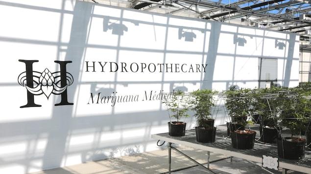 Une affiche comportant le nom de l'entreprise et des plants de marijuana dans une serre