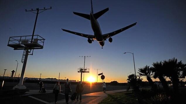 Un avion dans le coucher de soleil au-dessus d'un chemin bordé de palmiers.