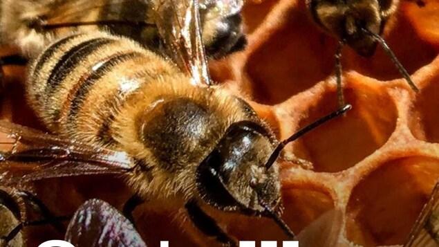Des abeilles sur une ruche.