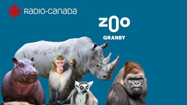 publicité radio canada zoo de granby
