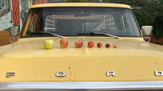 Des fruits sont posés sur le capot d'un vieux camion Ford.