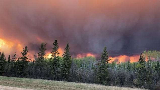 Un feu consume une forêt, dégageant une grande quantité de fumée noire.