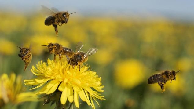 Les pesticides altèrent le système nerveux des insectes, entraînant la paralysie et la mort.
