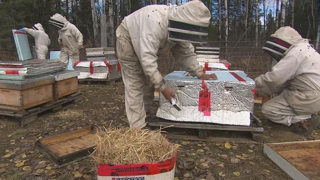 Des travailleurs emballent des ruches.
