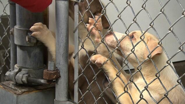 Deux chiots dans une cage.