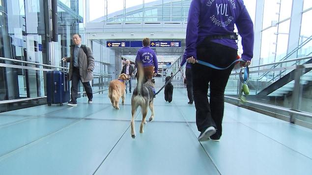 Des chiens et leurs maitres marchent à l'aéroport Montréal-Trudeau