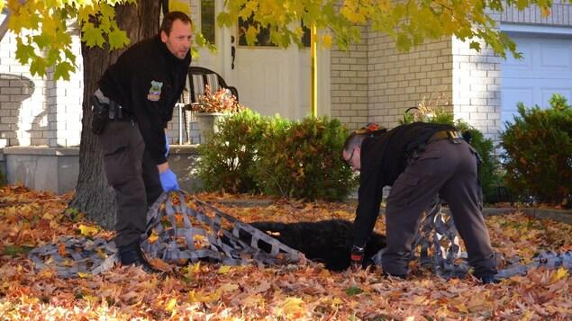 Deux agents de la faune qui tiennent un filet avec un ours au sol.