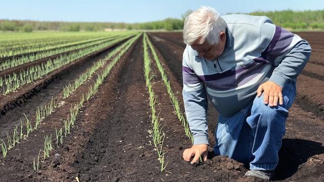Jean-Bernard Van Winden, producteur maraîcher en Montérégie, remplace les pesticides par une méthode biologique, mais ça lui coûte deux fois plus cher.