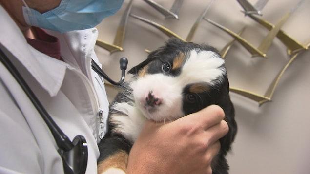 Dr Alexandre Burelle qui tient un chien dans ses mains.