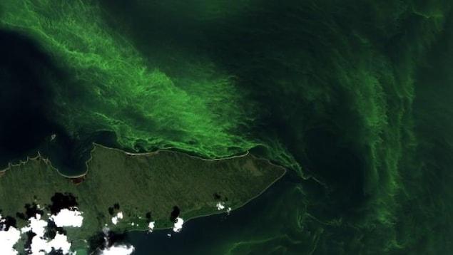 Une masse d'algue bleu-vert vue par satellite.