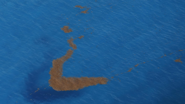 Des amas d'algues flottent sur l'eau.