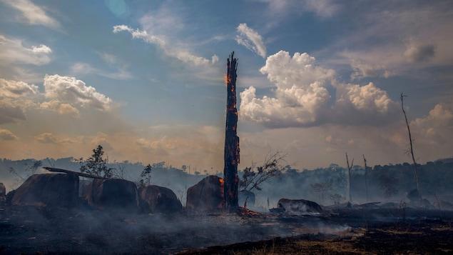 Un tronc calciné sur la terre brûlée.