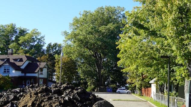 un grand arbre en arrière d'un stationnement.