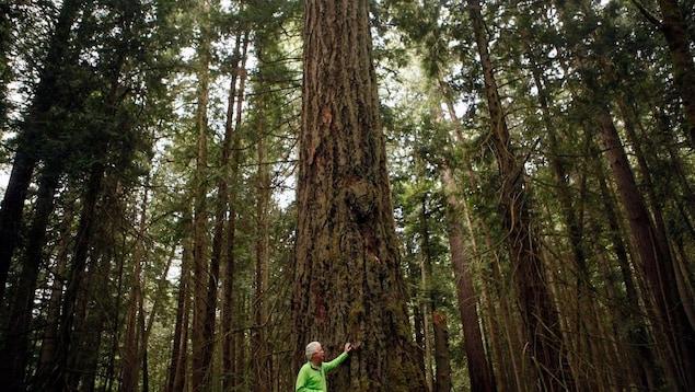Un arbre au coeur d'une forêt dense.