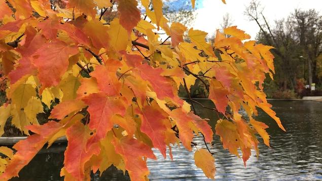Un bouquet de feuilles rouges, photographiées en automne, avec un étang et des arbres en arrière-plan.