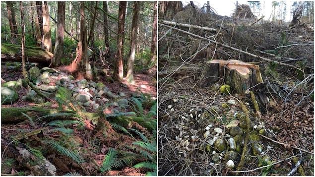 Des arbres ont été coupés sur le site spirituel de la nation Shíshálh.