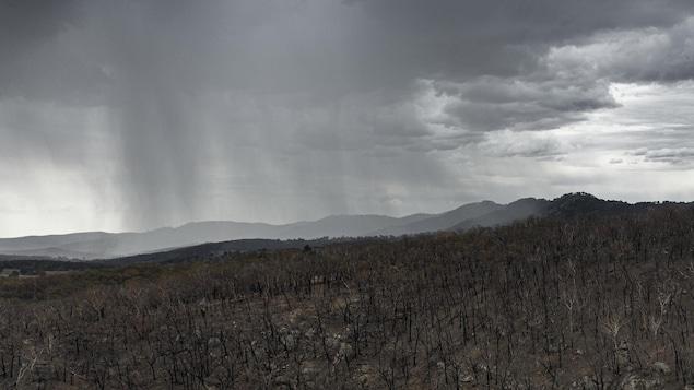 Plan aérien d'une forêt incendiée sur laquelle des nuages avancent.