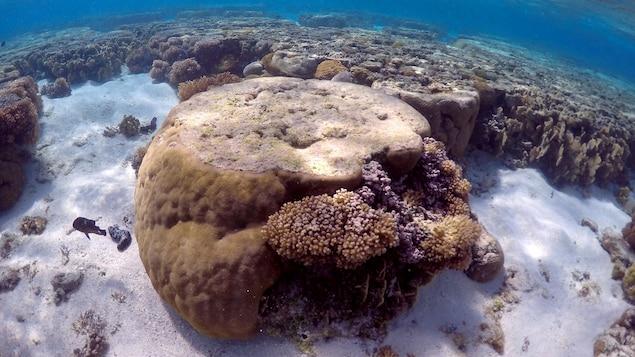 La Grande Barrière de corail australienne