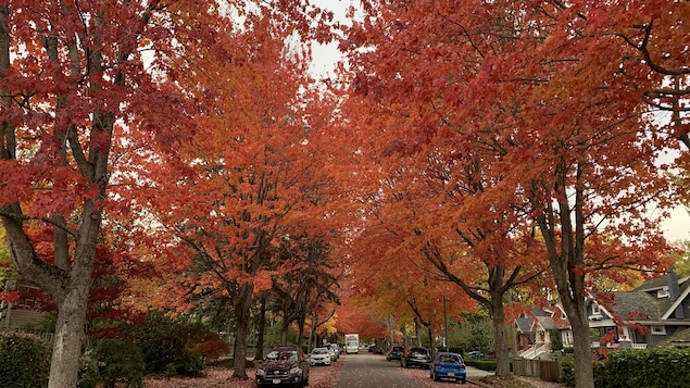 Un plan large d'un quartier résidentiel où sont tombées des feuilles mortes.